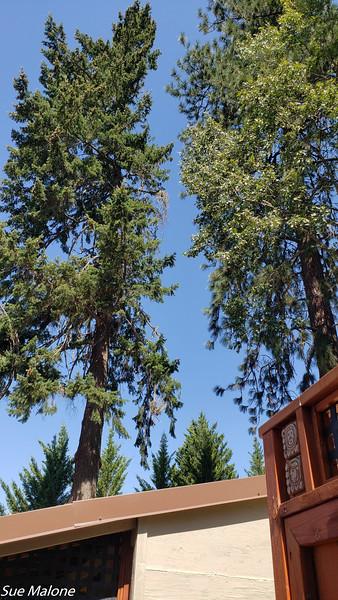 09-07-2020 Clear Skies.jpg
