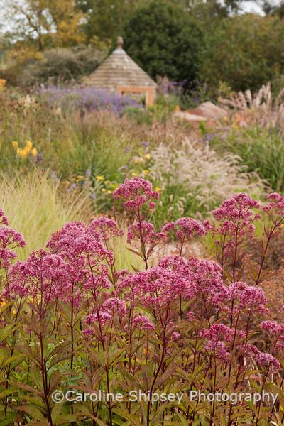 The Organic Gardens,Holt Farm-4973.jpg