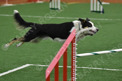 TMAC AKC Agility Trial, May 5-6, 2018