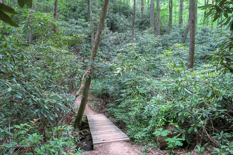 Sycamore Cove Trail -- 2,520'