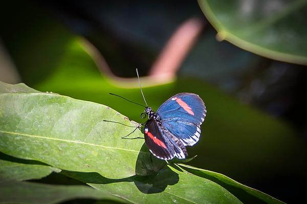 Butterflies in the Garden - Ft Worth