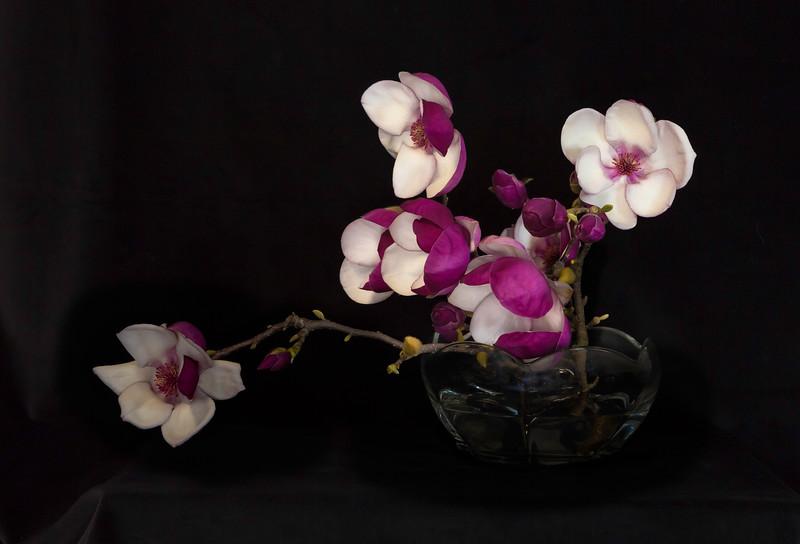 OrchidsLast.jpg