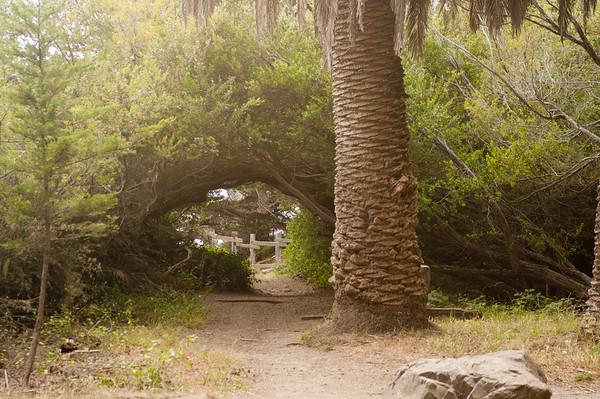 Montara Forest