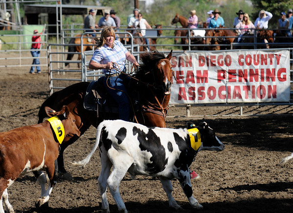 Team Penning Photos | SDCTPA April 18 Team Penning Competition
