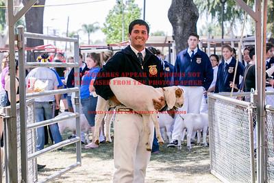 2015 Citrus Fair - Goats