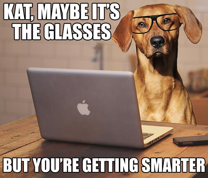 Dog Wearing Glasses.jpg