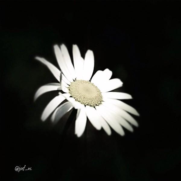 2012-07-04_1341410059.jpg