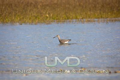NC Coastal Wildlife