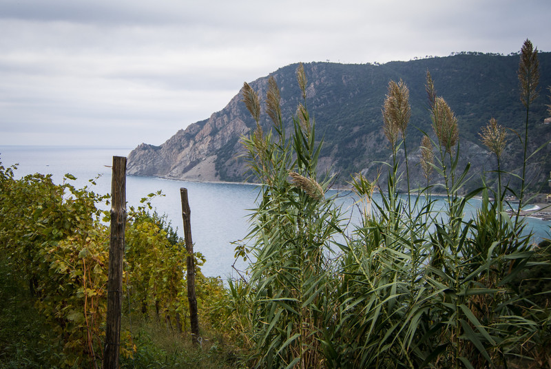 And vineyards