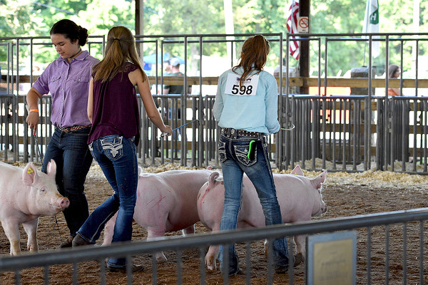 Youth Swine Homegrown & Showmanship 8-16-2016