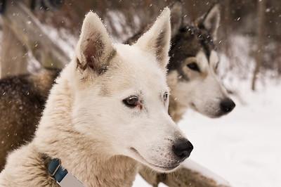 Peace Pups