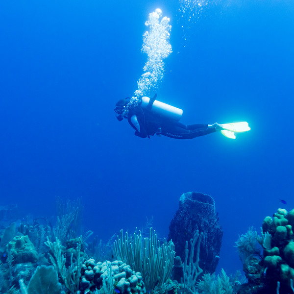 Scuba diver near coral reef underwater, Dive Site, East Wall, Belize