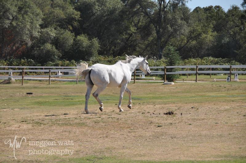 EB&Horses-114.jpg