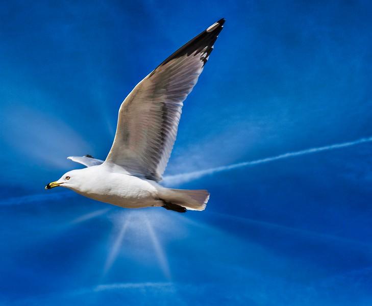 SM Sea Gull 2.jpg