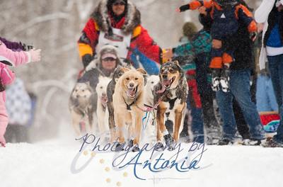Iditarod 40