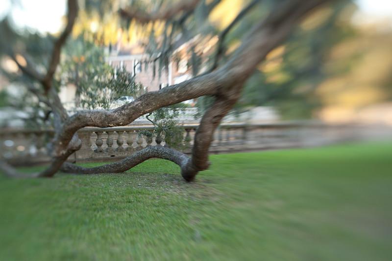 Lensbaby_tree_20091105_190.jpg