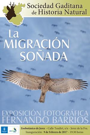 Fotografía Aves. Fernado Barrios. La migración soñada.