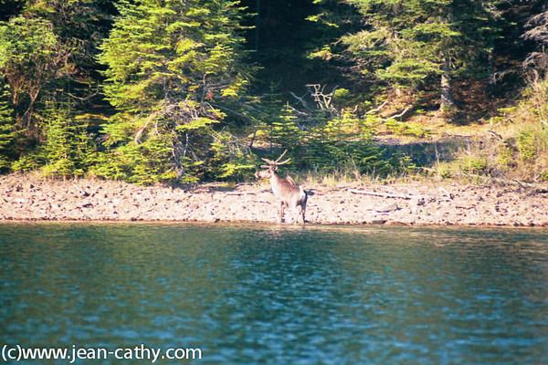 Lake Superior North Shore 2003 -  (25 of 32)