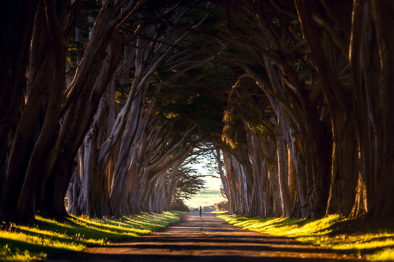 Landscape Photography at the Cypress tree tunnel