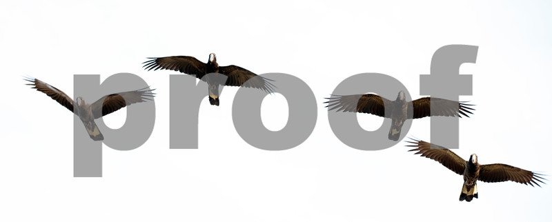 Black coockie 6.jpg