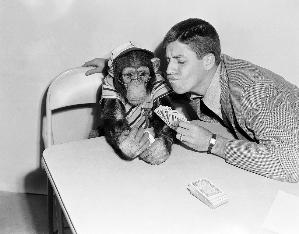 . Comedian Jerry Lewis try to figure out how Pierre, a five-year old chimpanzee, and fellow Hollywood actor, managed to get seven aces and three red threes during a canasta game they were playing on Jan. 27, 1950.   After all Jerry dealt the cards. (AP Photo/Frank Filan)