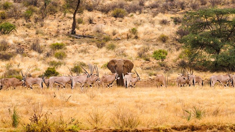 safari-2018-42.jpg