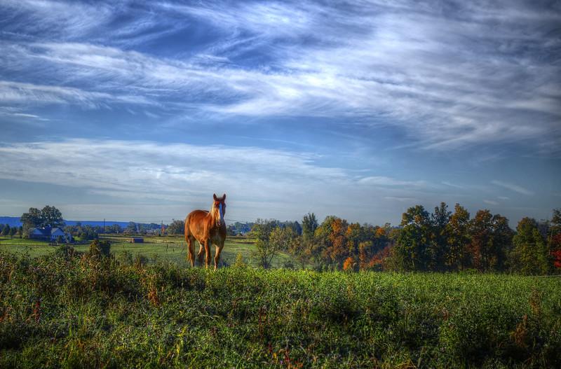 autumn 2014 - lone horse(p).jpg