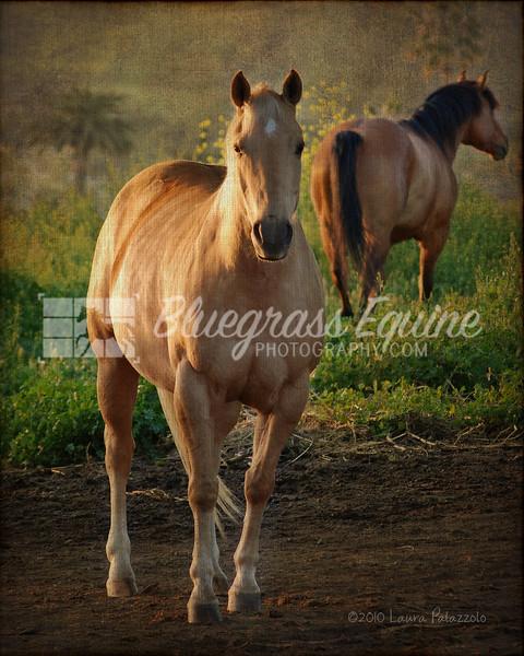 Artistic Horses