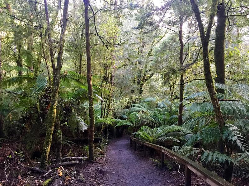 Maits Rest Rainforest Trail
