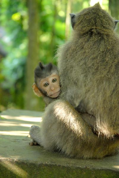 Monkey Baby.jpg