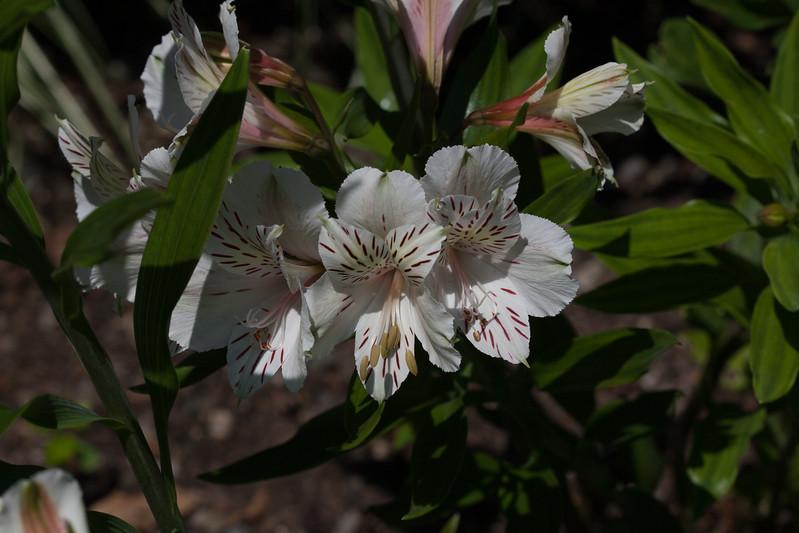 2009 06 30_NY Botanical Gardens_0663.jpg