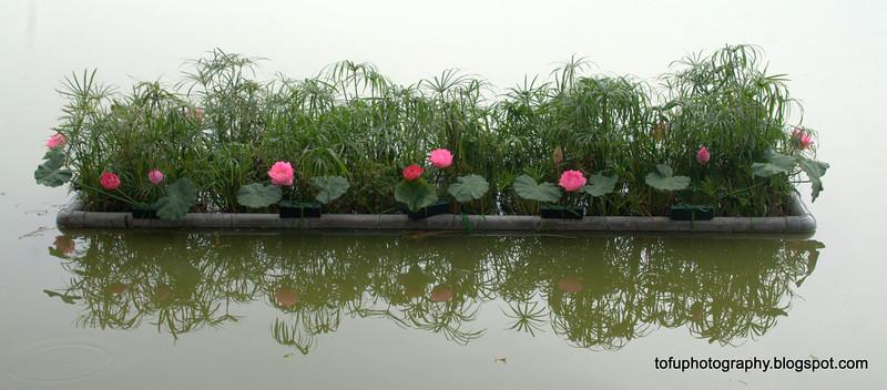Flowers at the Hoàn Kiếm Lake in Hanoi, Vietnam in January 2012
