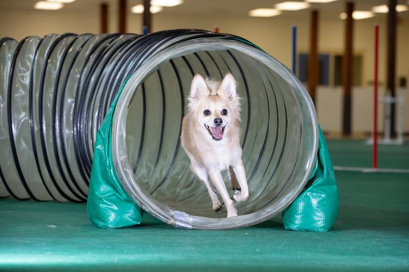 SPCA_Agility-70.jpg