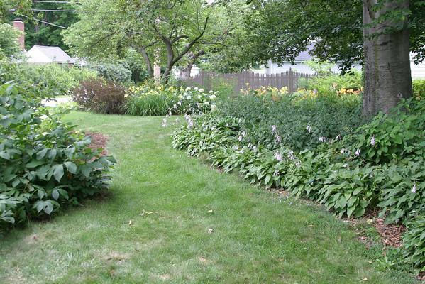 Native Garden Plants