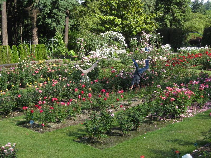 staceecalderon - rosegardensportlandor.JPG