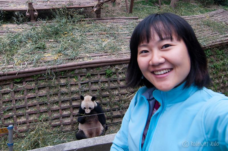 Juno_Panda_Chengdu_Sichuan_China.jpg