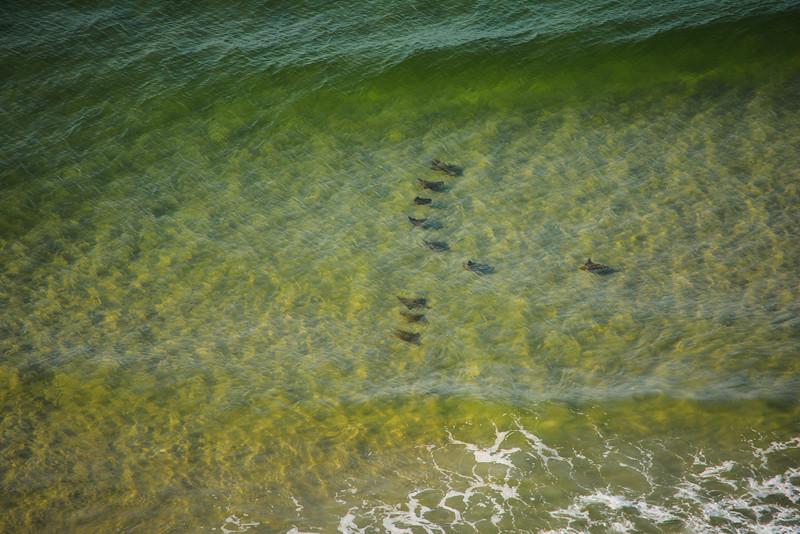 gulf coast wildlife