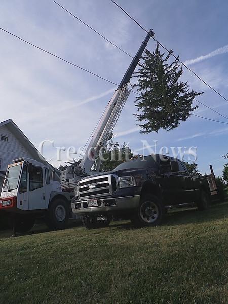 06-20-16 NEWS TL Tuttle Flying Tree