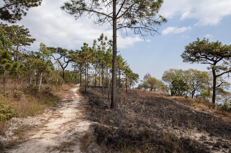 Phu Kradueng National Park (Thai: อุทยานแห่งชาติภูกระดึง) in Loei Province, Thailand.