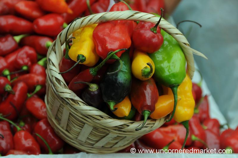 Basket Full of Chilies - Mistura Gastronomy Festival in Lima, Peru