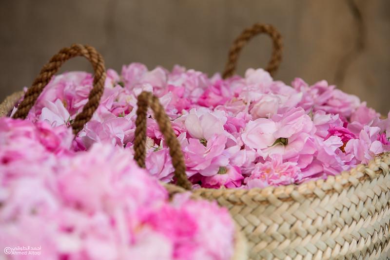 Roses Water (42)-Aljabal Alakhdhar-Oman.jpg