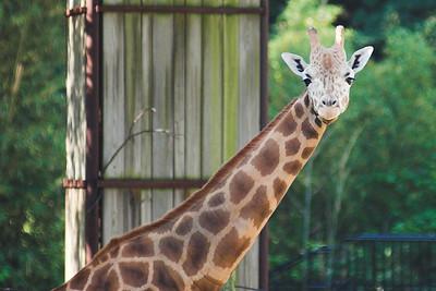 DC Zoo Misc