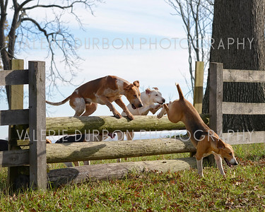 BLue Ridge Hunt Opening Meet ~ October 31, 2015