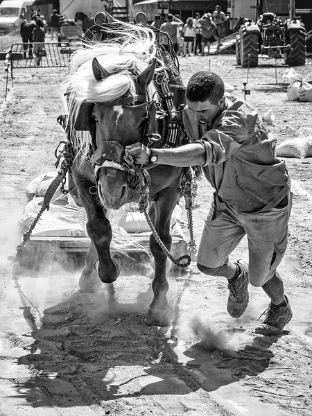spain - horse pulling comp