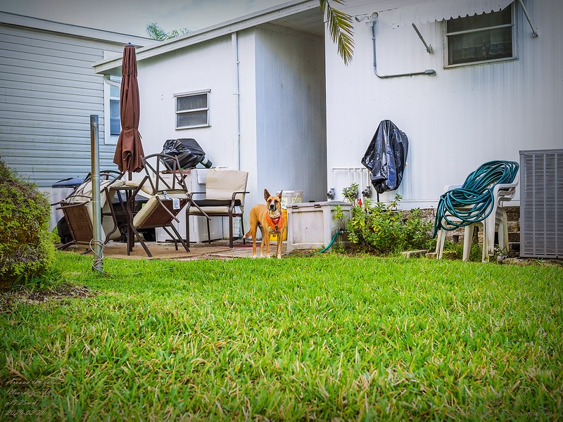 _2260083_pl5 25mm1.8 around the house.jpg