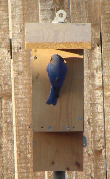Duhons' Fort Worth Yard Birds