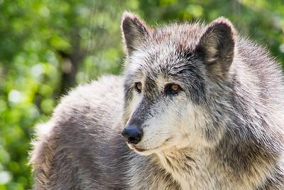 2012_04_24 Wolf Sanctuary of PA