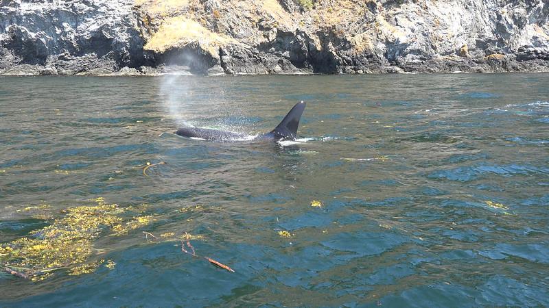Orca 3.jpg