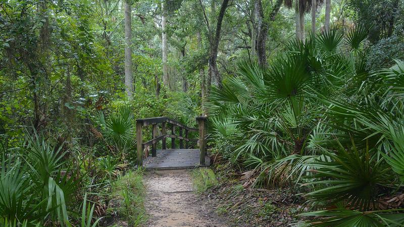 Boardwalk leading into woods