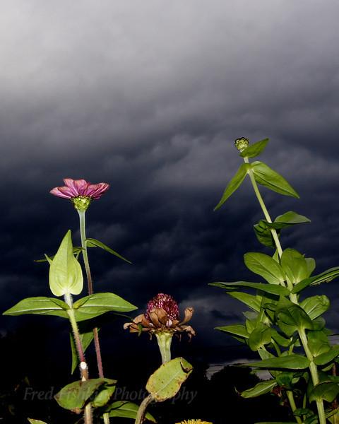 flowers clouds.jpg